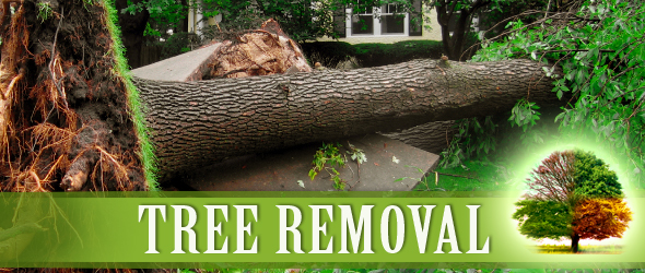 tree removal wirral