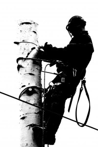 tree surgeon in bebington
