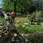 tree surgery wirral