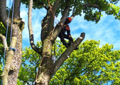 tree surgery2