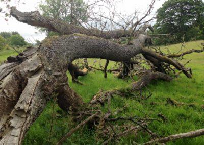 tree surgery4