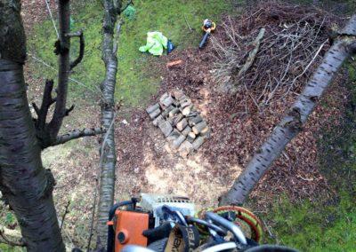 tree surgery3