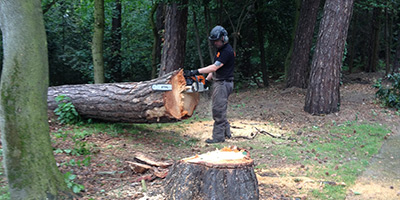 TREE FELLING SERVICES IN CARDIFF