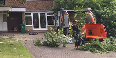 trusted tree surgeons covering cardiff and south wales
