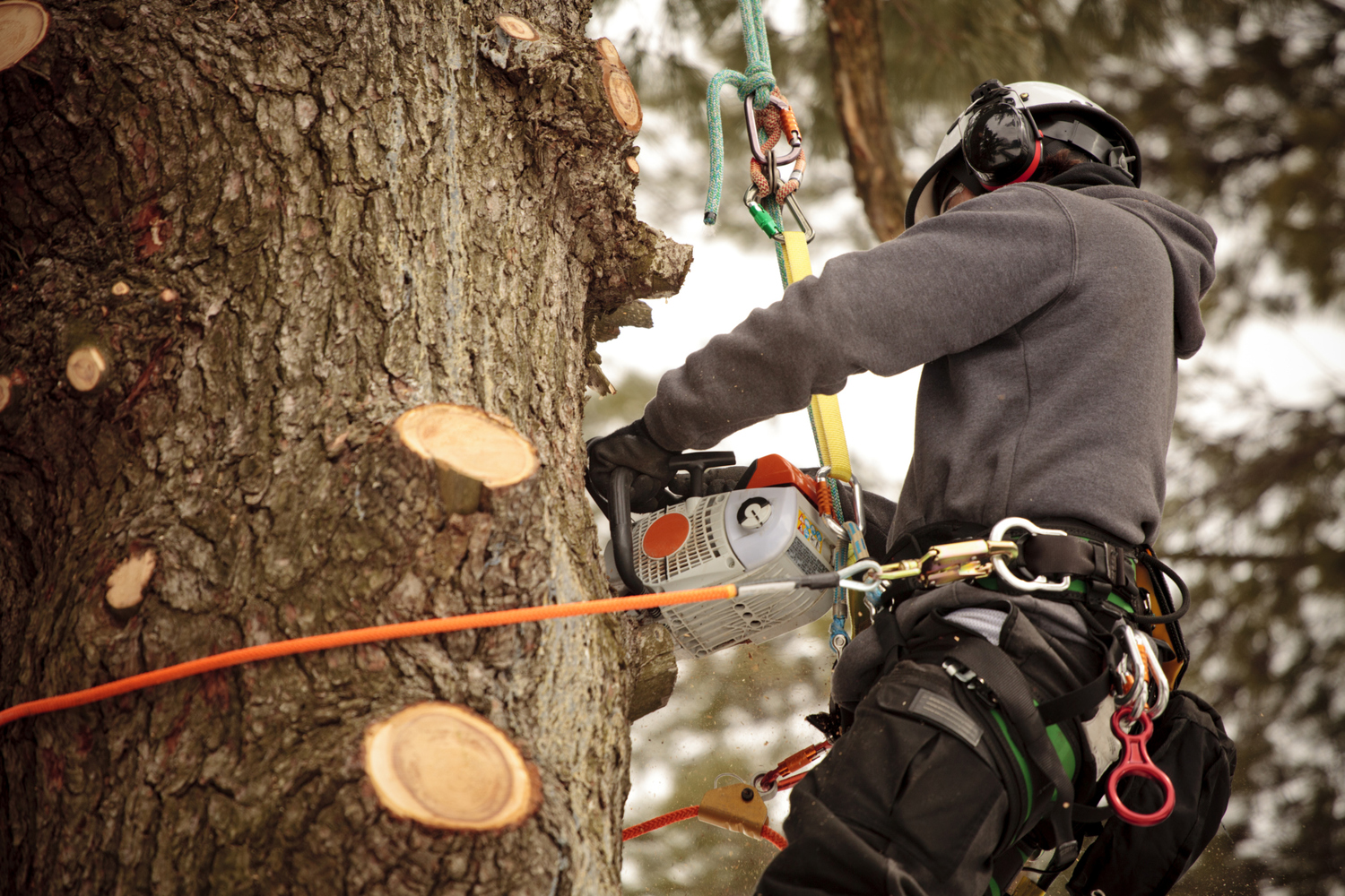 your local specialists for tree surgery in cardiff